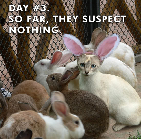 easter humor funny photo cat with bunny ears