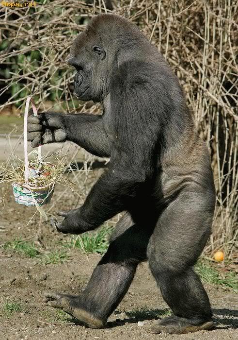 easter humor gorilla easter basket