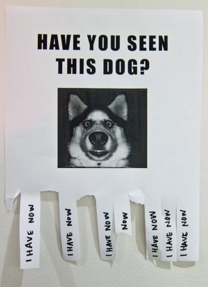 have you seen this dog sign funny husky face