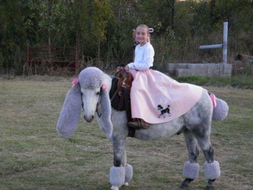 horse costumed like a standard poodle