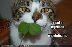 st patrick funny image caption cat eat a leprachaun
