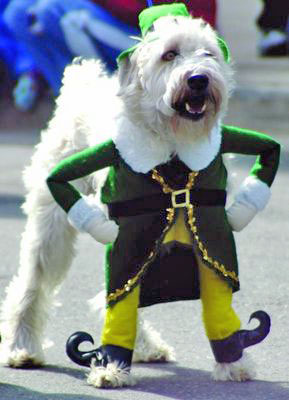 st-patricks-day-dog-dress-as-a-leprechan