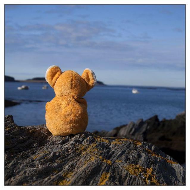 Teddy Bear reminiscing on cliffline by ocean