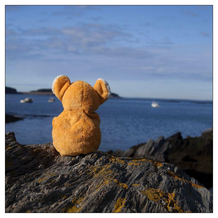 Teddy Bear reminiscing on cliffline by ocean