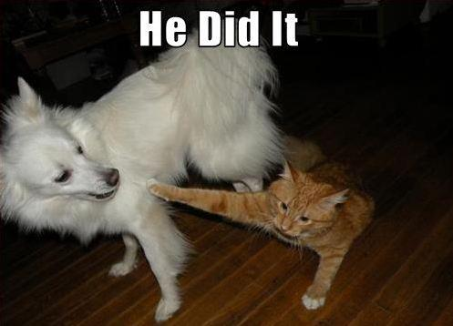 Cat blaming dog Funny dog photo with captions
