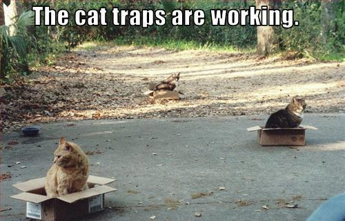 cat traps are working