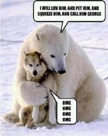 dog humor husky hugged by polar bear