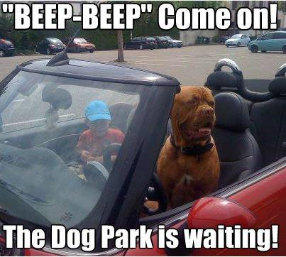 dog park is waiting Funny dog photo with captions