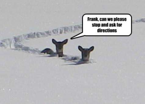 Funny animal photos captions 03