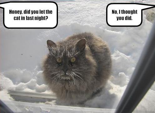 Funny animal photos captions 11