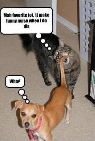 funny cat dog photo caption cat bite dog tail