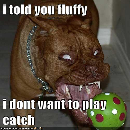 Funny dog photo caption don't want to play catch