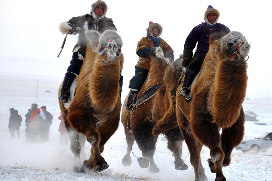 Mongolian tribesmen take part in a camel race