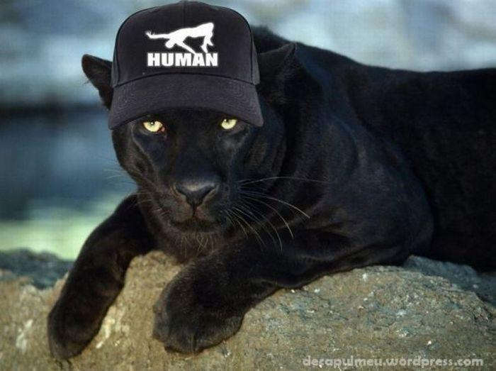 puma human hat