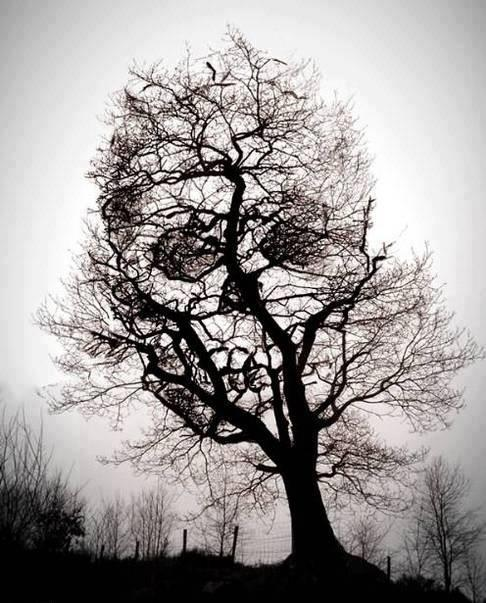 skull in the tree optical illusion