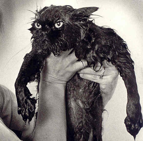best-pictures-of-wet-cats1