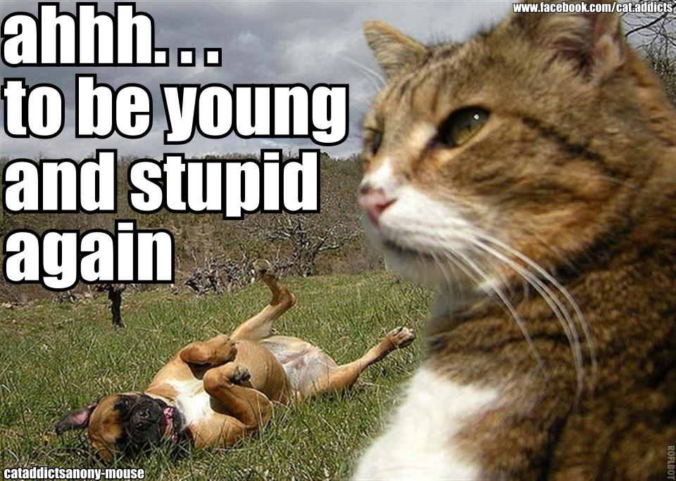 cat calling dog young and stupid