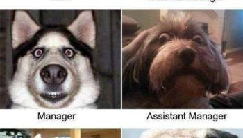 Good Job Dog Meme