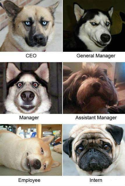 dog faces job titles