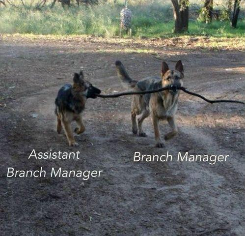 dogs branch managers
