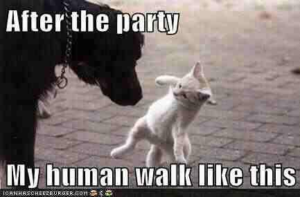 Funny dog and cat photo caption after the party my human walk like this