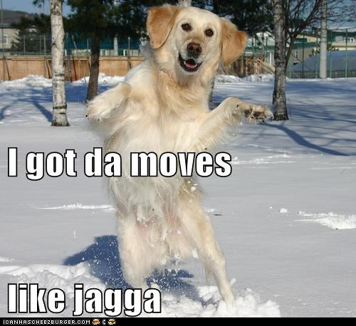 funny-dog-pictures-i-has-a-hotdog-moves-like-jagga