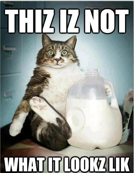 funny photo captions cat caught drinking milk
