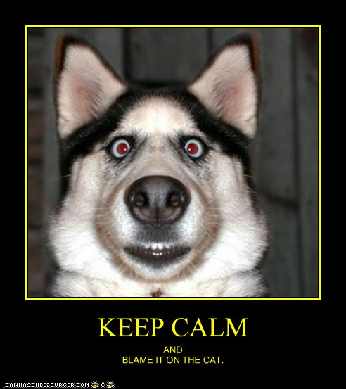 keep calm and blame it on the cat