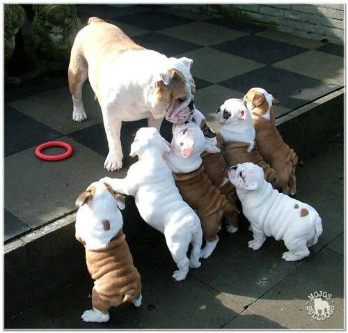 lifes_tough_get_a_dog_50_photos37