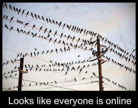 everyone online