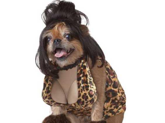 border terrier sexy halloween costume