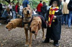 Crazy-Halloween-costumes harry potter 3-headed dog
