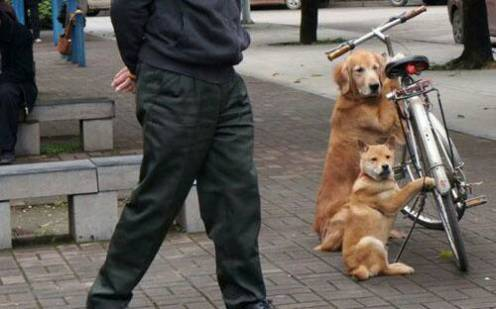 life's tough, get a dog (50 photos)19