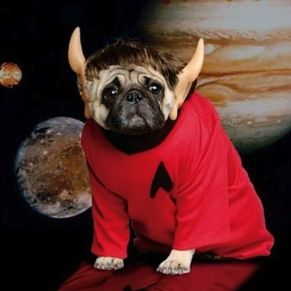 pug dressed as spock for halloween