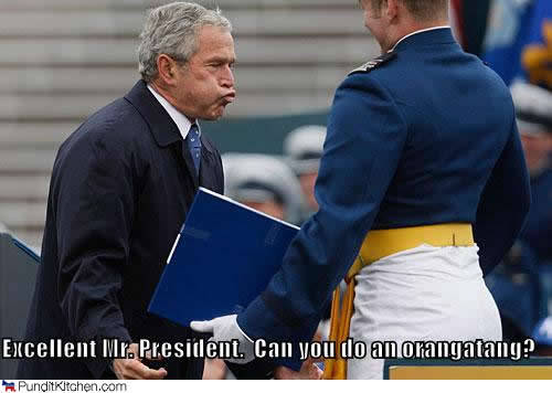 bush-orangatang-funny-photo-meme