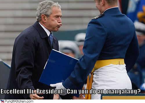 bush-orangatang-funny-photo-meme