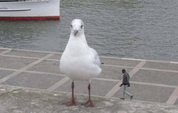 photos mess with mind big seagull little human