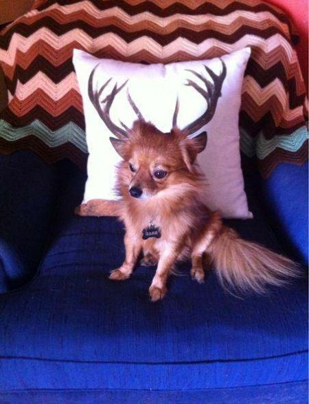 photos mess with mind dog with antlers
