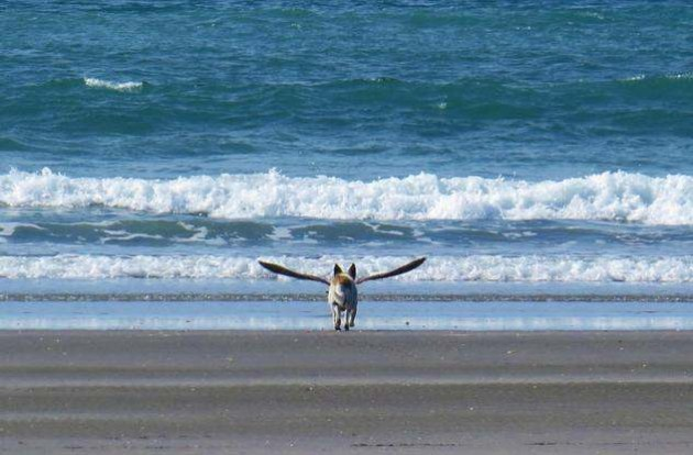 photos mess with mind dog with wings