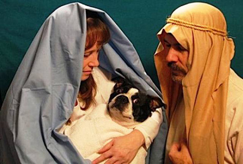 funny-christmas-cards-virgin-dog-birth