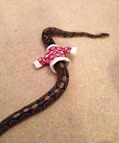 snake in santa jacket