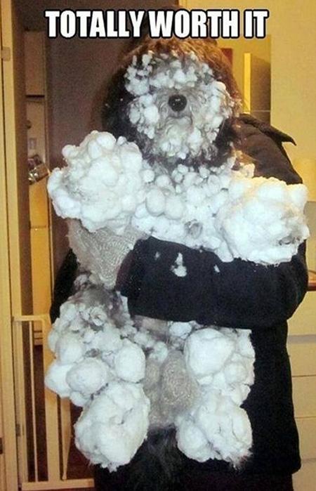 snowydog
