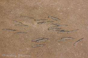 Ax-marks in the concrete from the riot.