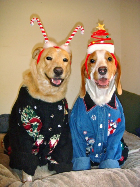 Two adorable dogs dressed up in their ugly Christmas sweaters.