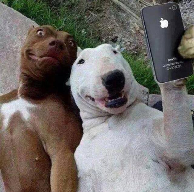 dogs-selfie