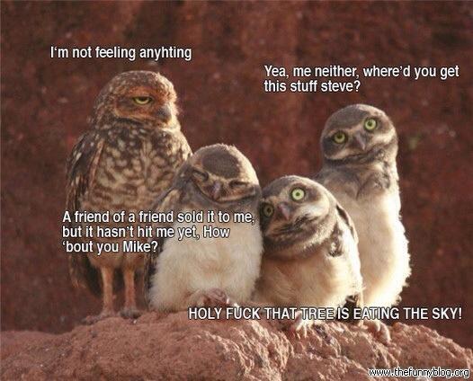 owl-humor-drugs