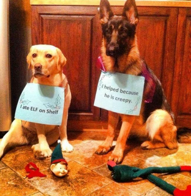 dog-shaming-elf-on-a-shelf