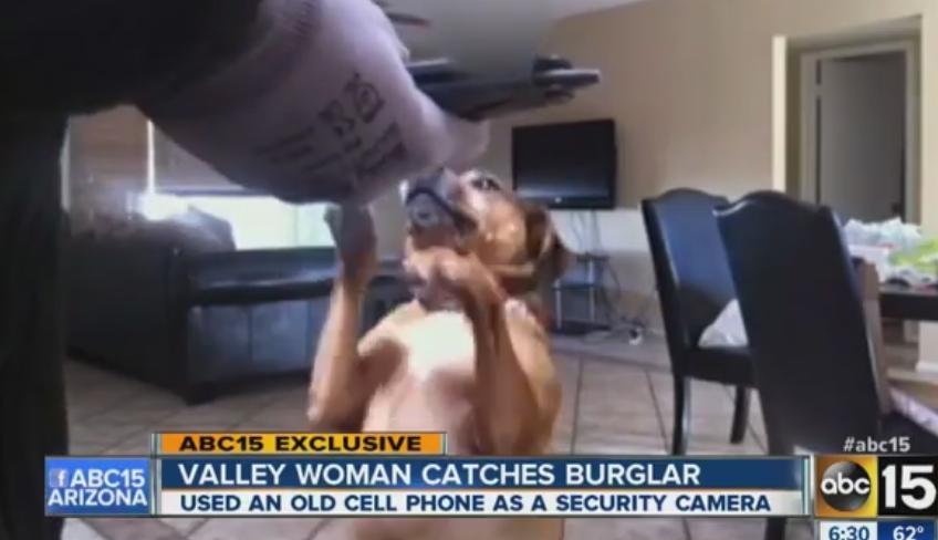 tempe-az-woman-watches-burglar-feeding-dog-treats-via-camera
