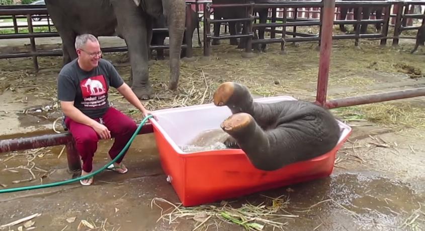 newborn-elephant-taking-a-bath