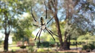 spider-02